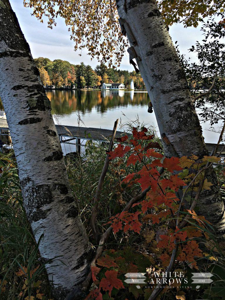 bay-view-through-the-birch