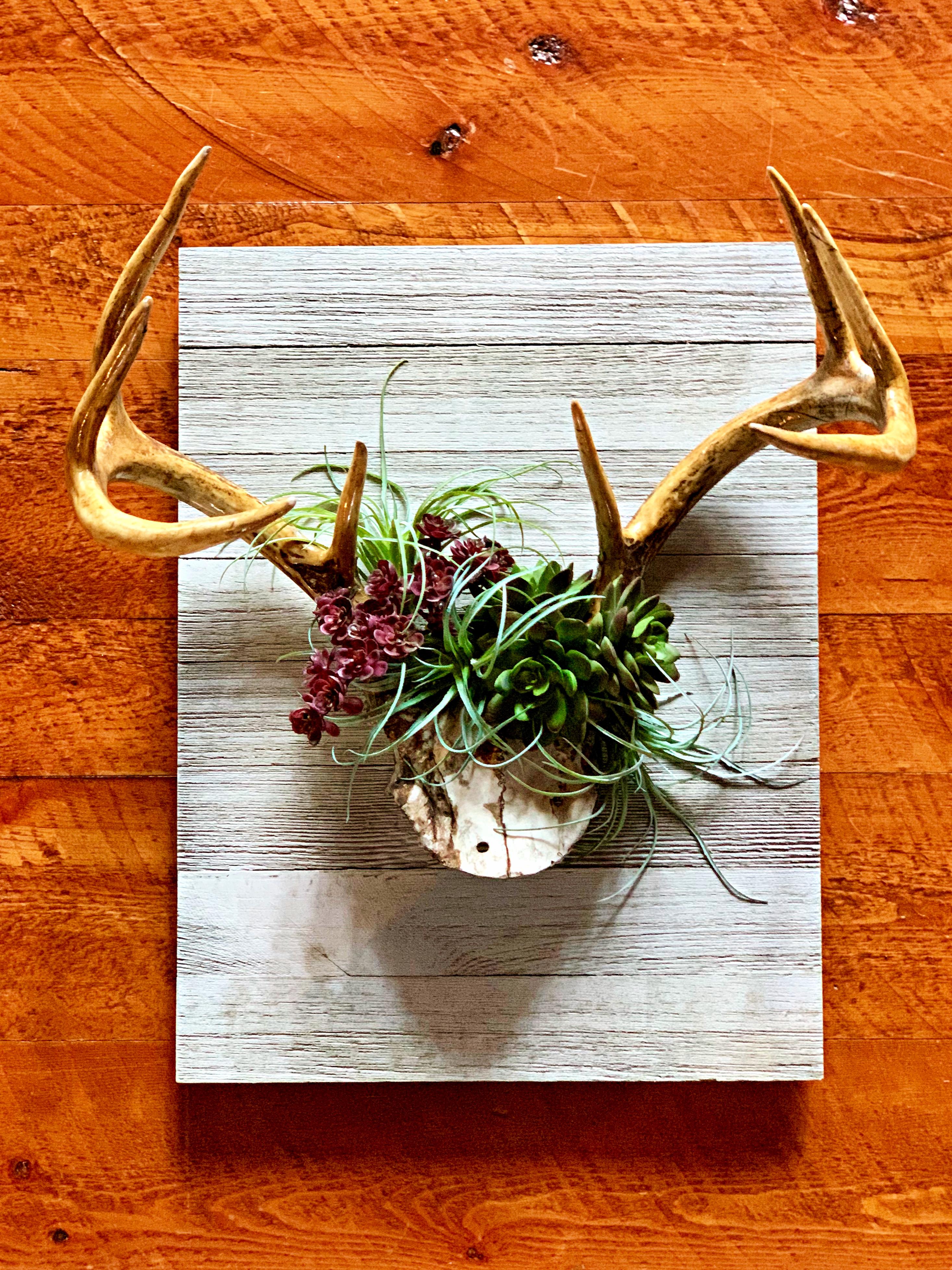 DIY-antler-succulent-wall-art ~ White Arrows Home